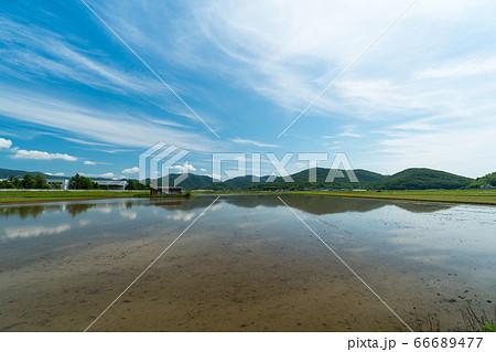 田植え前の広大な水田の風景イメージ 66689477