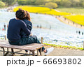 ひたち海浜公園ネモフィラ 青の世界 66693802