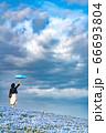 ひたち海浜公園ネモフィラ 青の世界 66693804
