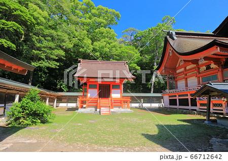 【愛媛県】新緑の大山祇神社(本殿) 66712642