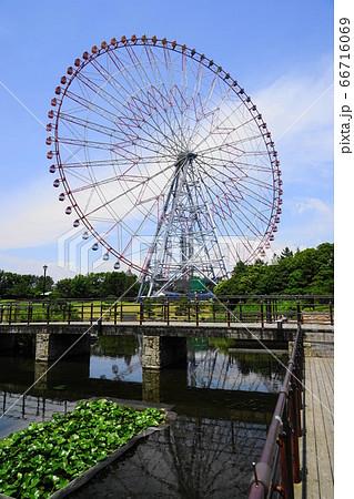 6月 江戸川33大観覧車・葛西臨海公園 66716069