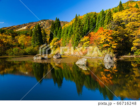 湖と中国山地の秋の写真です。遠景にスキー場が写っています。青空と紅葉のコントラスト!! 広島県 66716248