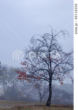 寂れた朝-日の出前、薄く霧の出た晩秋風景 66718309