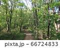 山梨県甲府市、湯村山登山道の新緑 66724833