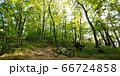 山梨県甲府市、湯村山登山道の新緑 66724858
