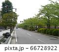 (例年なら歩くのも困難な) 5月3日のお堀端通り 小田原 66728922