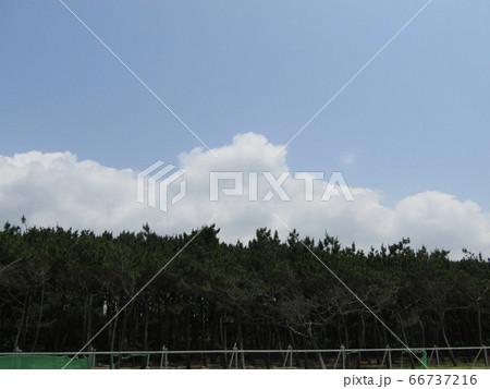 夏の白いr雲と青い空 66737216