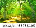 公園の木々のあいだに差し込む陽光 66738105