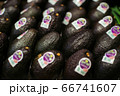 Avocados with blurred labels lying in supermarket. Bunch of fresh organic nutritional fruits in retail grocery. Vitamins, healthy eating, dieting. 66741607