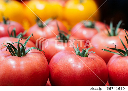 Close-up of red healthful tomatoes with yellow ones at the background. Organic vegetables lying on shelf in supermarket. Healthy food, dieting, seasonal product. 66741610