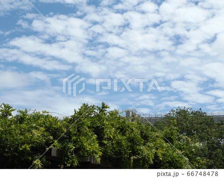 千葉公園の青空と白い雲 66748478