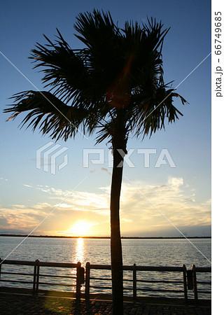 アマゾンの夕焼けとシルエットの椰子の木 66749685