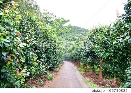 本州最西端、毘沙ノ鼻の景色(曇り) 66750325