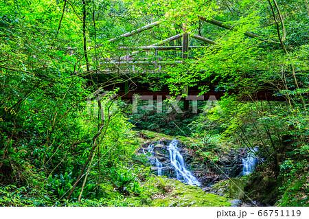 新緑の油山市民の森 ホオジロ橋 【福岡県福岡市南区】 66751119