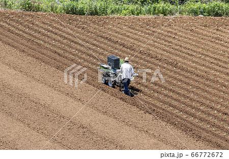 農業 圃場での作付け 66772672