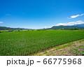 上山市 スカイタワー シンボル 高層ビル 田舎 66775968