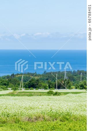 日本海とそばの花 秋田県にかほ市 66788401