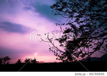 夕焼けに染まる空を背景にした大きな木のシルエット 66789600
