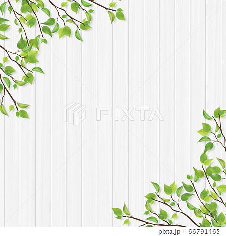 新緑のフレーム 白木 66791465