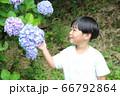 紫陽花と男の子 66792864