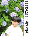 紫陽花と男の子 66792883