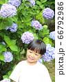 紫陽花と男の子 66792986