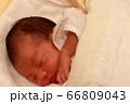 新生児 66809043