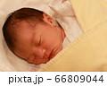 新生児 66809044