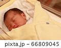 新生児 66809045