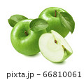 Green cooking apples isolated on white background 66810061