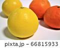 日向夏ミカンとオレンジ蜜柑 66815933