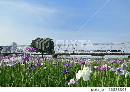 菖蒲の花咲く鉄橋を渡る京成スカイライナー 66828363
