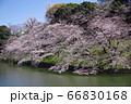 千鳥ヶ淵の桜 66830168