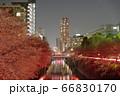 目黒川の桜の夜景 66830170