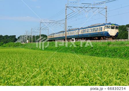 実った田んぼと113系成田線普通電車 66830254