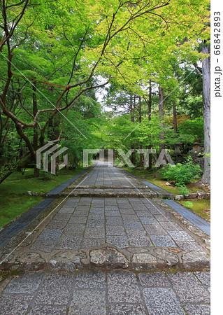 新緑に彩られた参道 五台山竹林寺(高知県高知市) 66842893