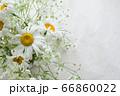 デージーとかすみ草の花束 66860022