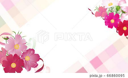 コスモスの花束とリボンのワイドバーチャル背景素材 66860095