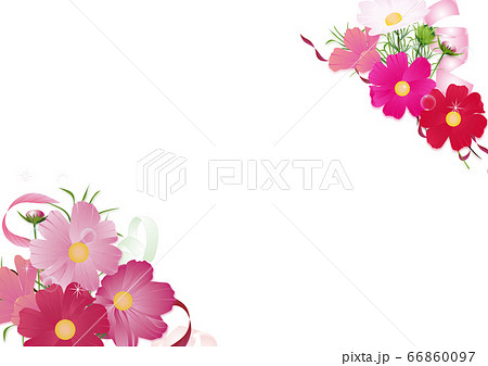 コスモスの花束とリボンのイラスト背景素材 66860097