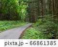 初夏の林道 66861385