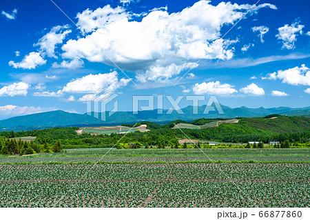 《群馬県》夏空の田園風景・嬬恋村 66877860