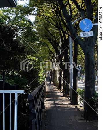 東京都大田区キヤノン本社前の並木道 66887194