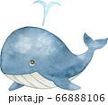 潮を吹くクジラ 66888106