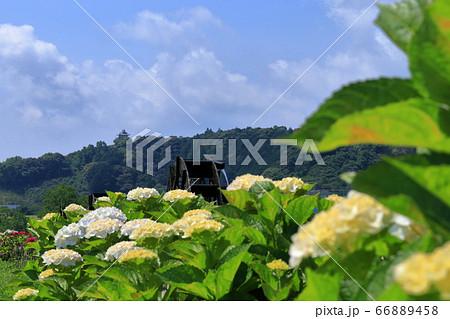 安並水車の里から中村城を眺める 初夏(高知県四万十市) 66889458