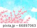花 青空 水彩風  66897063