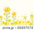 花 水彩風  66897078