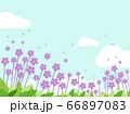 花 青空 水彩風  66897083