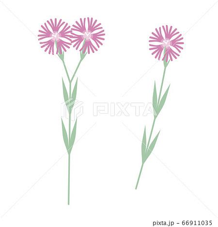 撫子のシンプルなベクターイラスト(秋の七草) 66911035