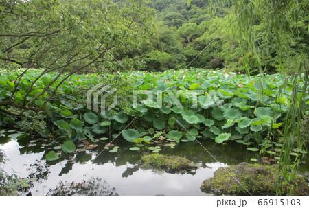栗林公園、蓮の蕾の見える風景ヨコ 66915103