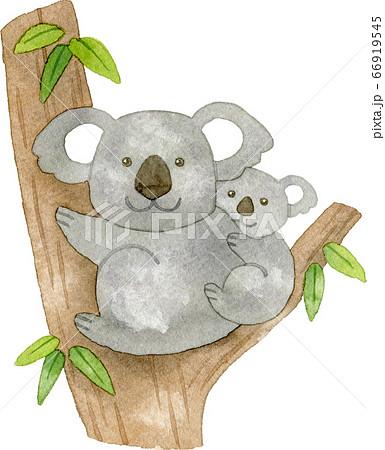 ユーカリの木と親子のコアラ 66919545